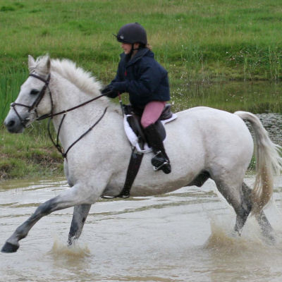 Water Jump Canter Through