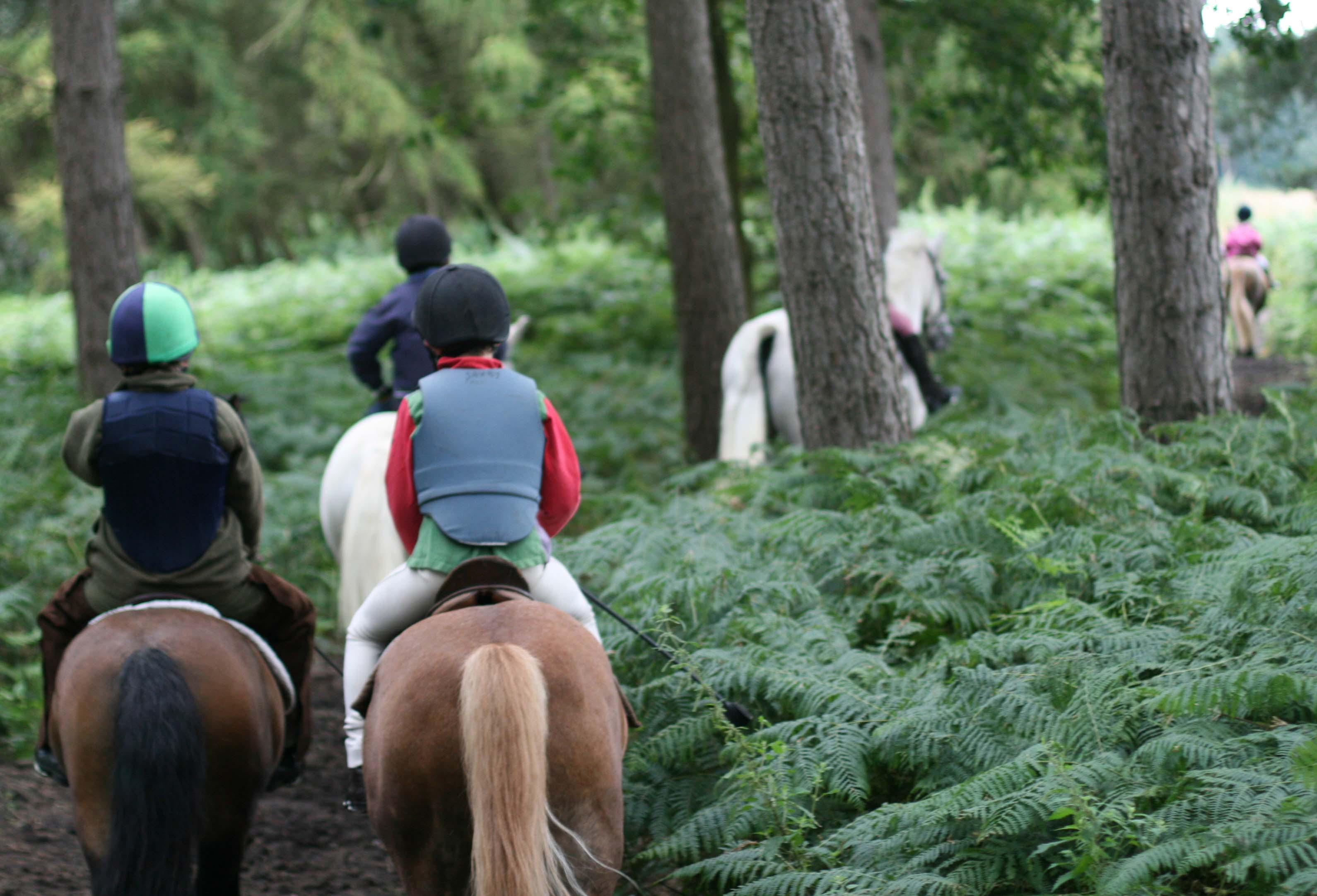 Horse Riding at Escrick York North Yorkshire