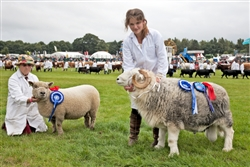 Sheep at the Great Yorkshire Show