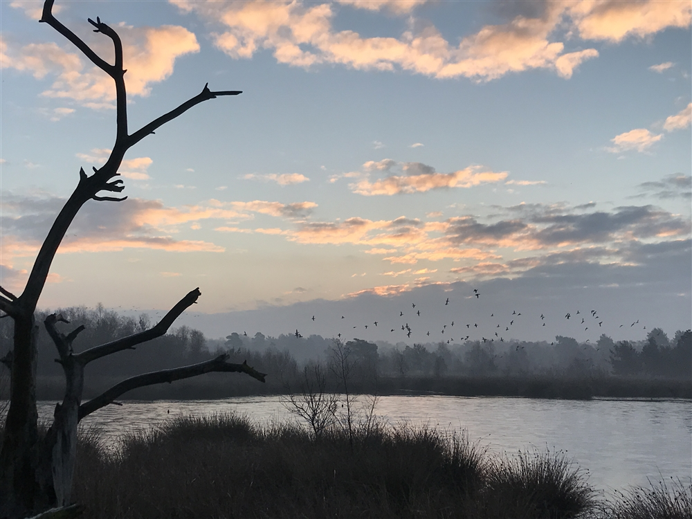 Dawn at Skipwith Nature Reserve